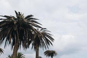 linha de palmeiras