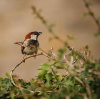 pássaro empoleirado nos galhos foto