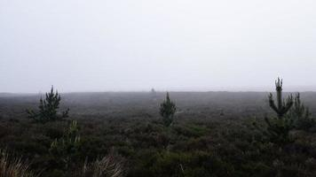 campo de grama verde foto
