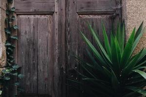 planta folheada verde