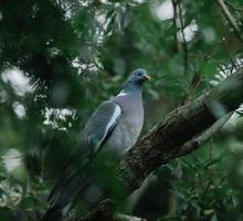 pássaro azul e branco no galho de árvore