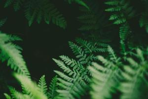 fechar foto de folhas verdes