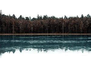 árvores ao lado do corpo de água foto