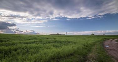 campo de grama verde brilhante foto