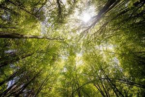 fotografia de árvores foto