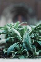 close-up de plantas foto