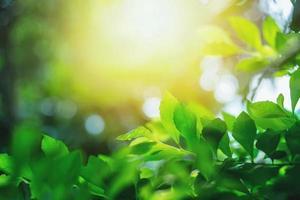 folhas verdes e luz solar foto