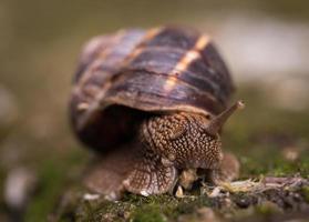 fotografia de foco raso de caracol