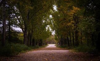 estrada de asfalto cinza