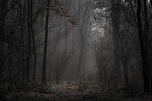 chão iluminado da floresta foto