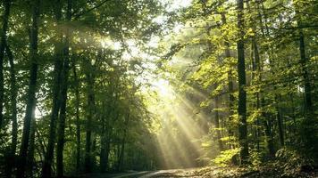 sol brilhando através de árvores foto