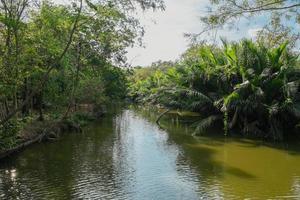 riacho que flui através do nipa palmeiral