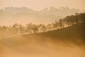 árvores e colinas na névoa foto