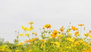 flores que desabrocham no jardim