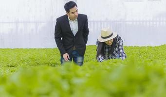 jovem gerente e agricultor estão trabalhando para verificar a qualidade dos vegetais