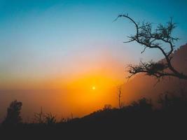 silhueta de árvores durante o pôr do sol foto