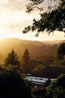 árvores verdes durante o pôr do sol foto