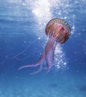 água-viva rosa e marrom