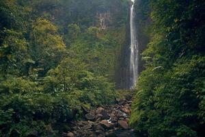 cachoeira na floresta foto