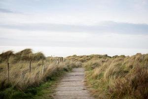 caminho de madeira entre o campo de grama foto