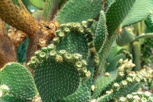 close-up de cactos floridos foto