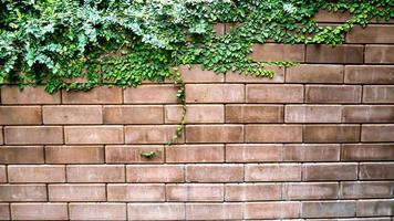parede de tijolos com planta verde foto