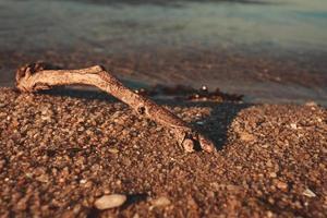 galho de árvore na praia foto