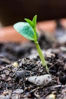 crescendo nova vida de planta foto