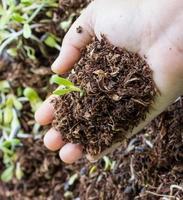 mãos segurando um broto verde com solo foto