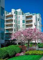 casa geminada moderna com cereja florescendo na frente. foto