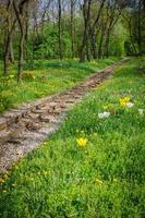 trilhos de trem e flores na floresta foto