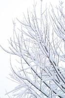 neve nos galhos foto