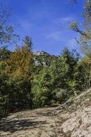 floresta e céu no outono em navarra