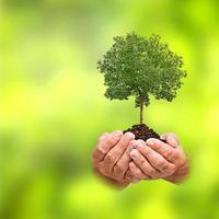 árvore nas mãos