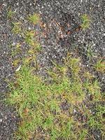 chão de asfalto urbano