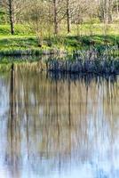 reflexos cênicos de árvores e nuvens na água foto