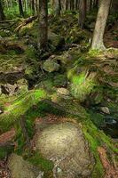 a floresta primitiva com o riacho - hdr