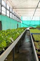 centro de desenvolvimento agrícola