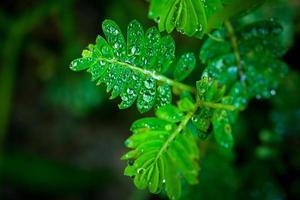 gotas de água na grama verde. macro