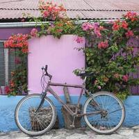 bicicleta, buganvílias e paredes pintadas com cores vivas, guatemala foto