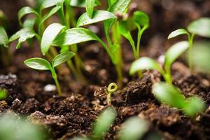 macro sementes crescendo