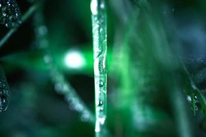 gotas de água na grama azul e fria. tiro macro foto