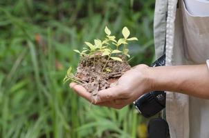 semeadura de plantas foto