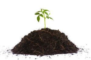 muda de planta pequena
