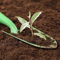 pequena planta nova vida, poder e força