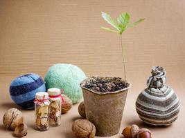 natureza morta com carvalho germinativo foto