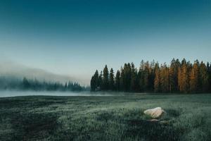 campo enevoado com grama e árvores foto