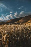 campo de trigo perto de colinas foto