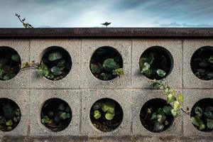 plantas em plantador de concreto foto