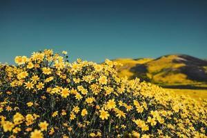 close-up de campo de flores amarelas
